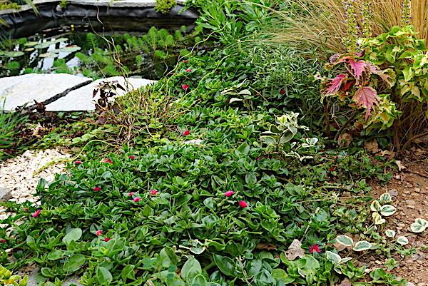 Bassin extérieur avec voiles de chine - Page 11 Dsc06422