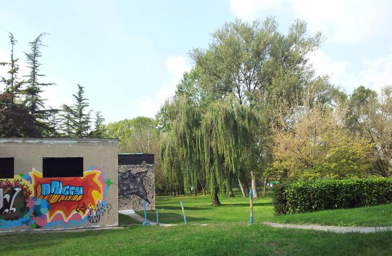 Per boschi sul fiume Adda - Domenica 24/9 Graffi11