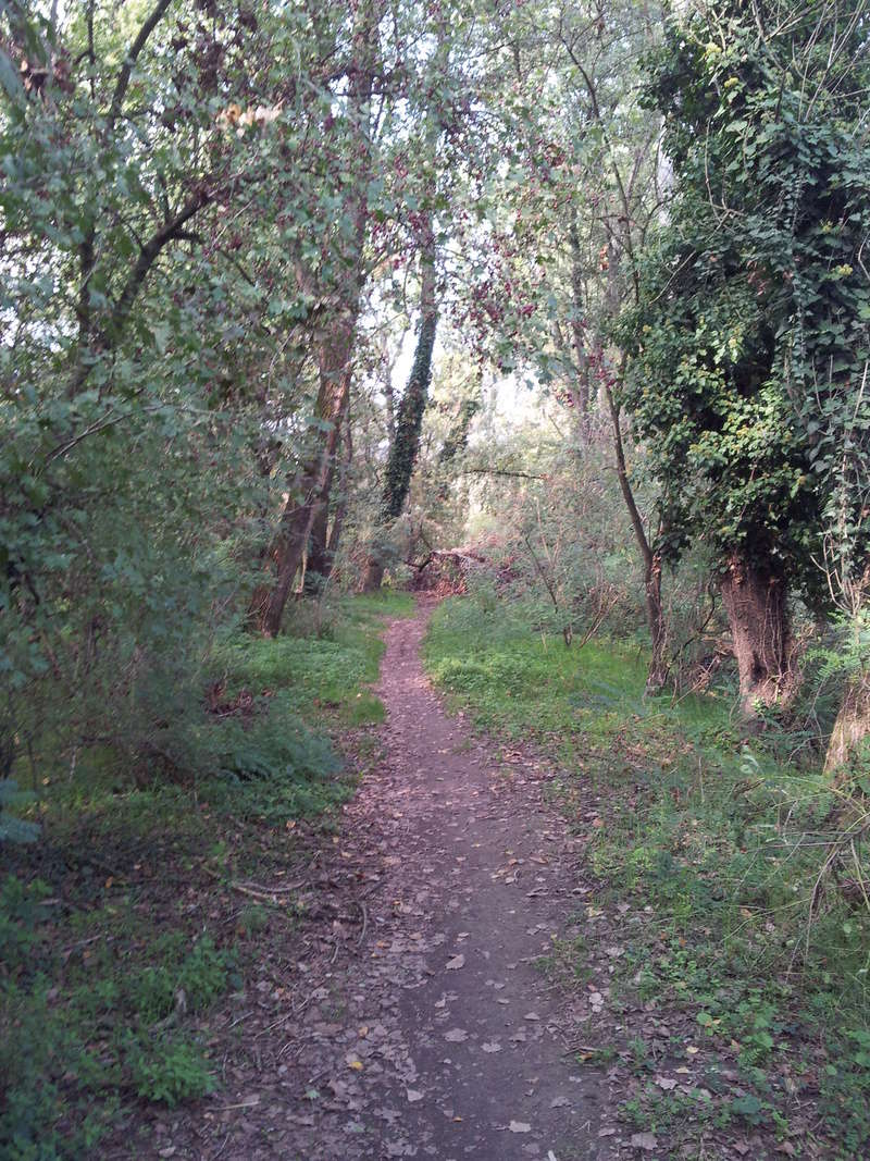Per boschi sul fiume Adda - Domenica 24/9 Sentie11