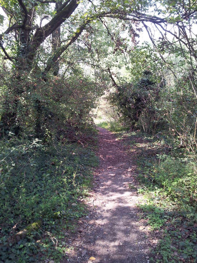 Per boschi sul fiume Adda - Domenica 24/9 Sentie12