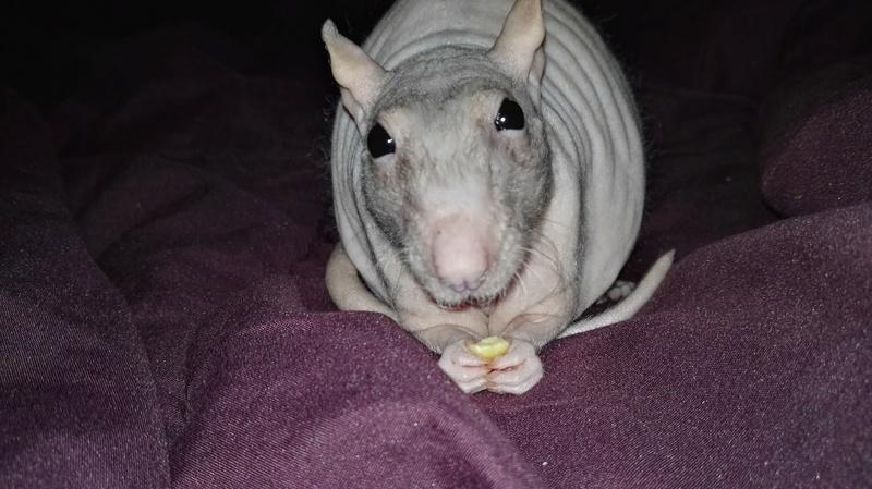 Les ratons de Random Img_2010