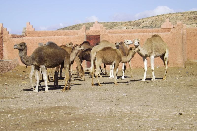 [Maroc/Commerces]  Souks et Marchés  Dscf1010