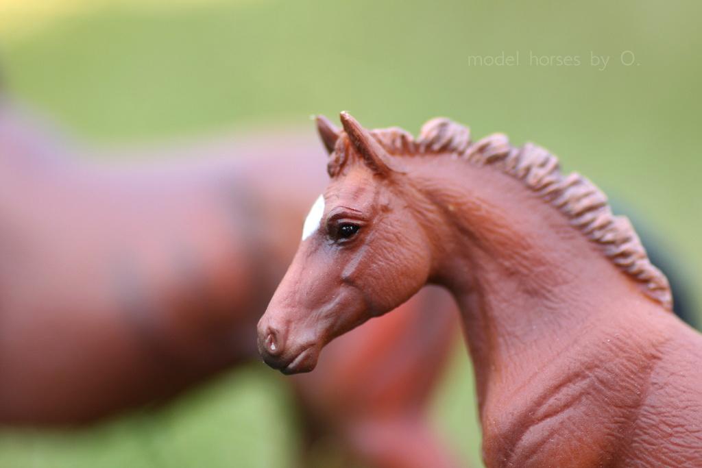 my Deborah McDermott's horses - Page 2 Coll_f11