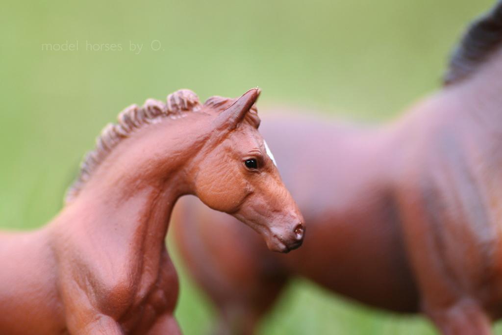 my Deborah McDermott's horses - Page 2 Coll_f12