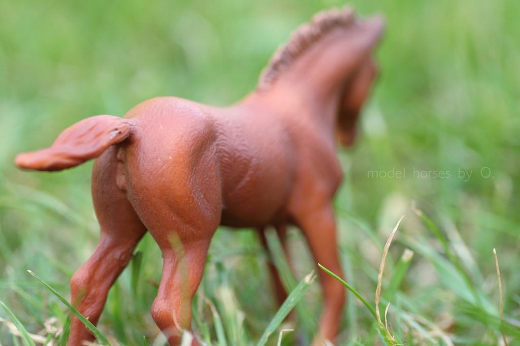 my Deborah McDermott's horses - Page 2 Coll_t10