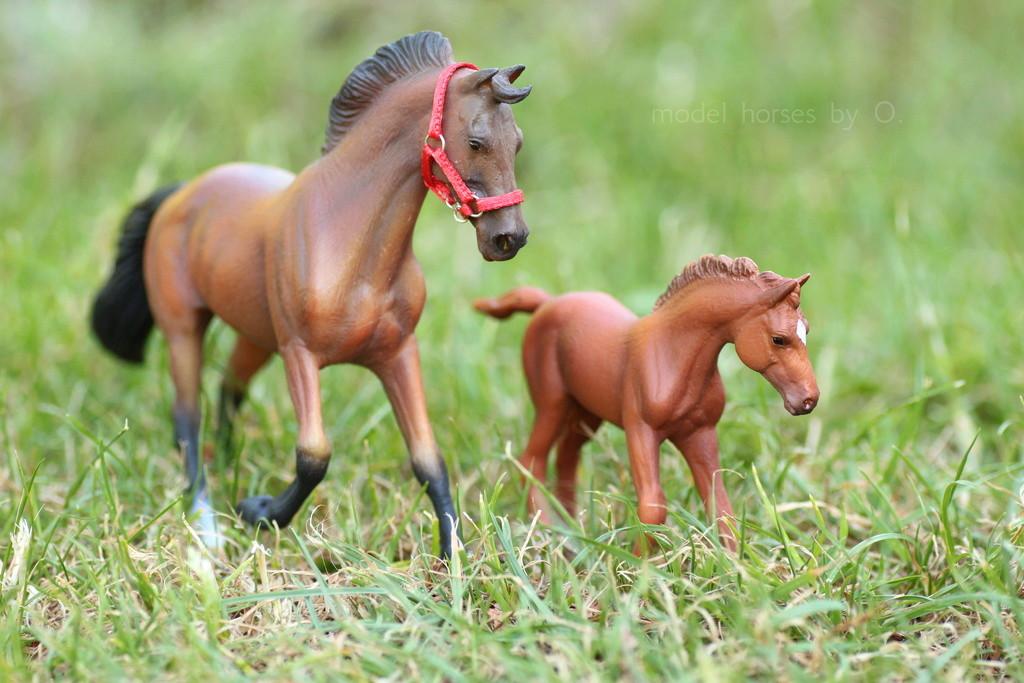 my Deborah McDermott's horses - Page 2 Coll_t11