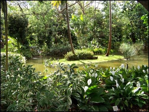 Jardin botanique de Deshaies 16_spa10