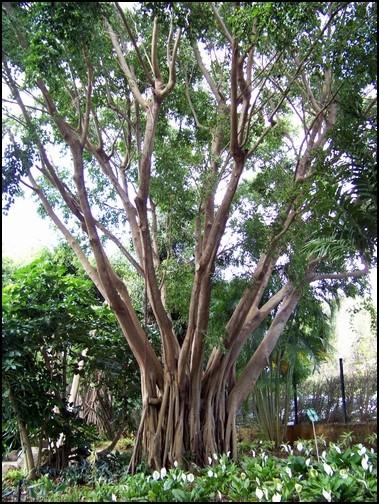 Jardin botanique de Deshaies 17_div10