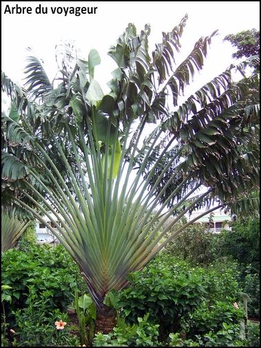 Jardin botanique de Deshaies 48_arb10