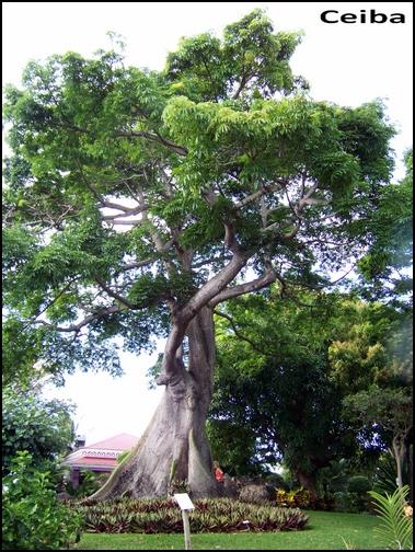 Jardin botanique de Deshaies 49_cei10