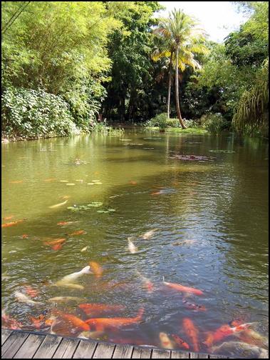 Jardin botanique de Deshaies 5_etan10