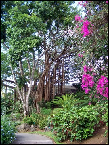 Jardin botanique de Deshaies 63_div10