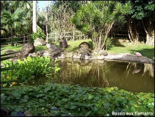 Jardin botanique de Deshaies 82_bas10