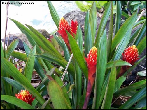 Jardin botanique de Deshaies 85_guz10