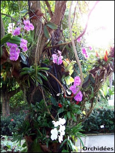 Jardin botanique de Deshaies 86_orc10
