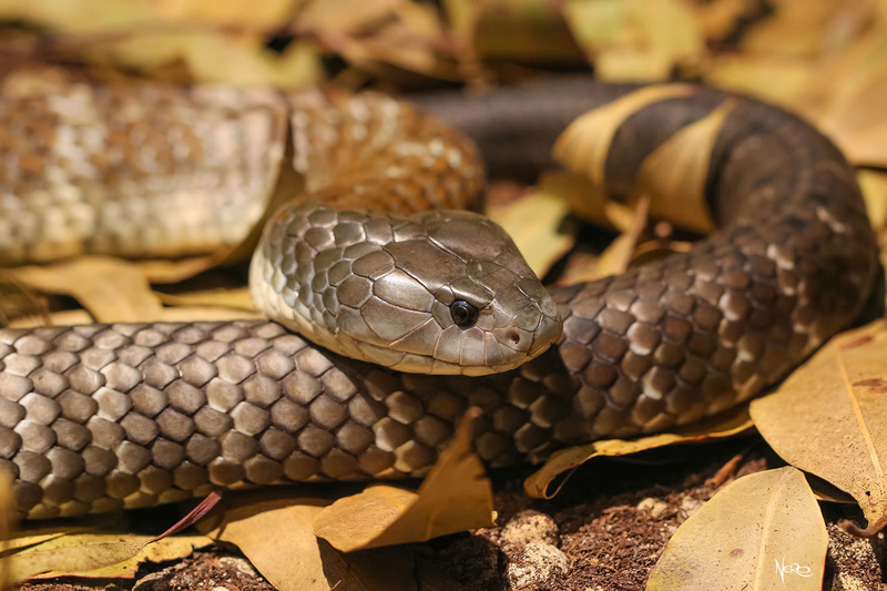 snakes season Img_0511