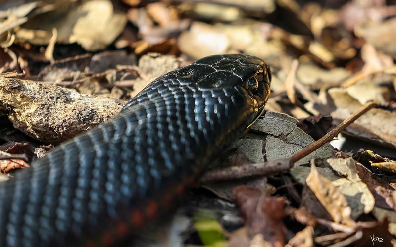 snakes season Img_3710