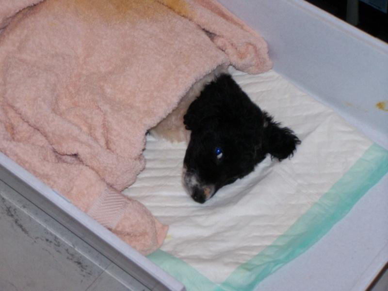 Carnet de bord des Puppies 101_3010