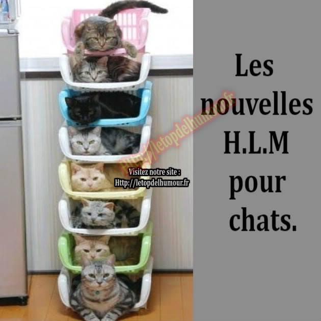 HUMOUR : le chat dans tous ses états - Page 37 14317310