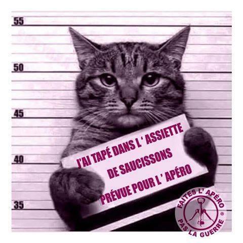 HUMOUR : le chat dans tous ses états - Page 38 15181110