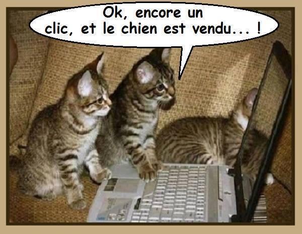 HUMOUR : le chat dans tous ses états - Page 38 15439910
