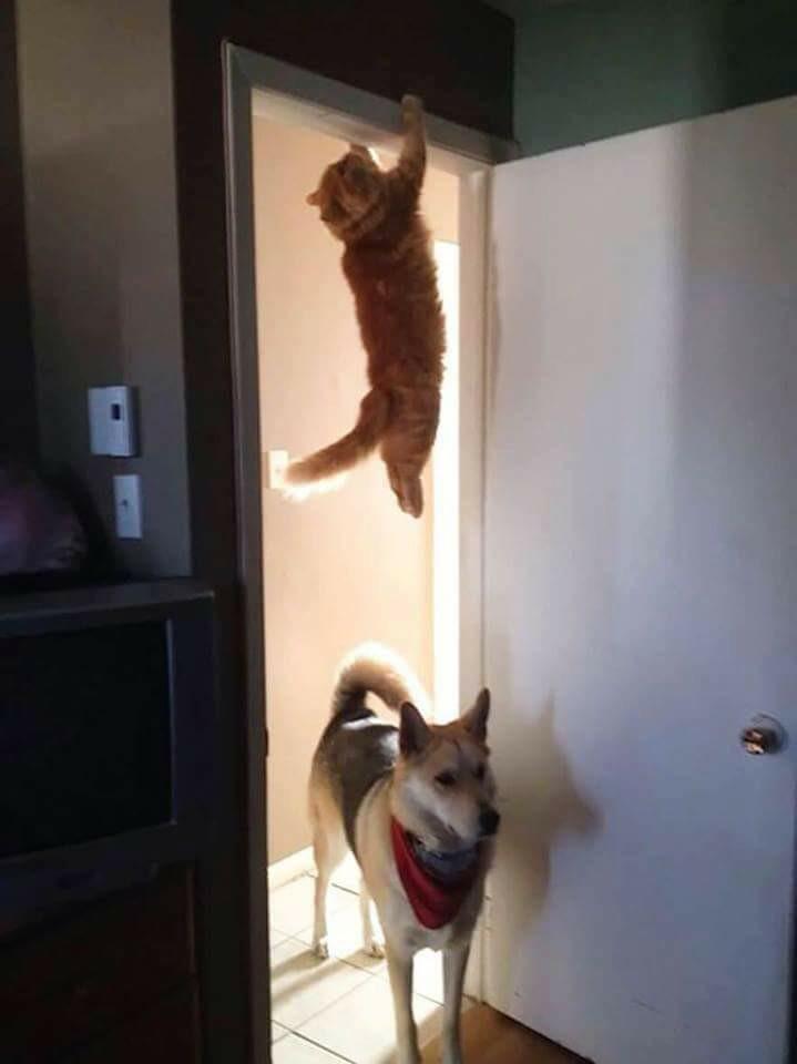 HUMOUR : le chat dans tous ses états - Page 39 20228410