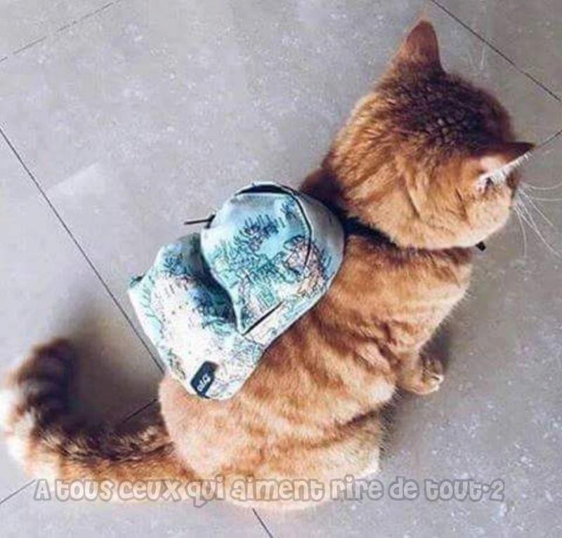 HUMOUR : le chat dans tous ses états - Page 2 21248410