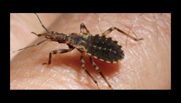 Si vous avez aperçu cet insecte chez vous ou dans votre jardin, consultez immédiatement un médecin! 111