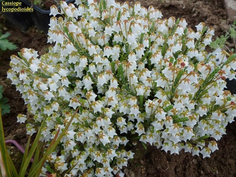 photos de plantes rares P1000311