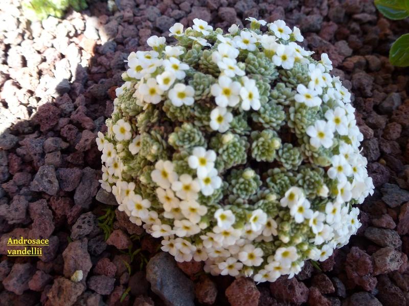 photos de plantes rares P1000313