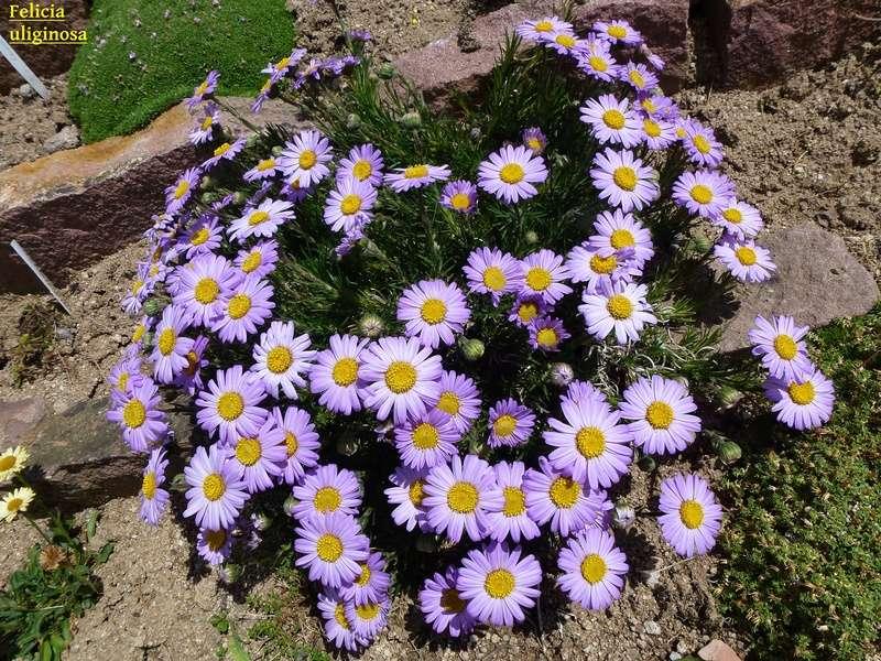 photos de plantes rares P1000710