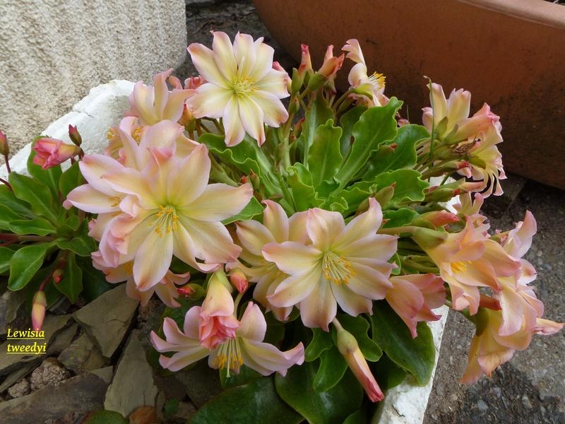 photos de plantes rares P1010210