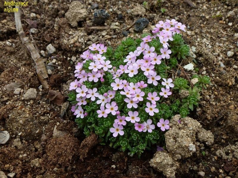 photos de plantes rares P1010211