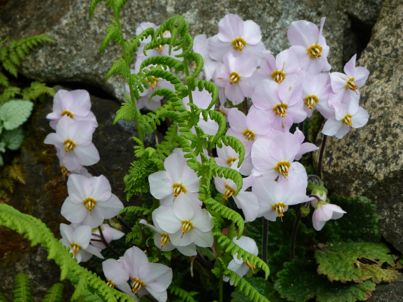 photos de plantes rares P1010411