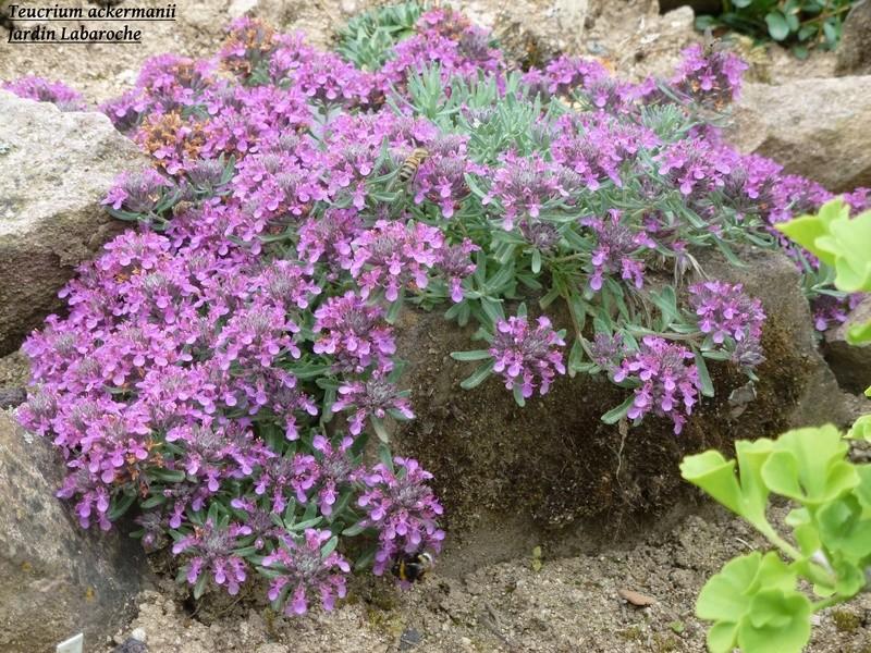 photos de plantes rares P1010510