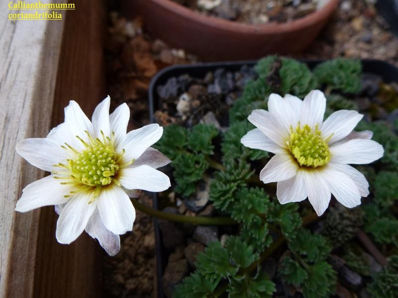 photos de plantes rares P1010810