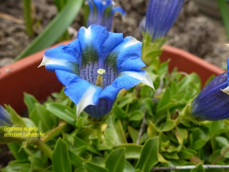 photos de plantes rares P1020010