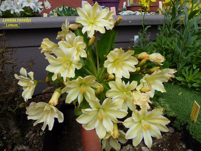 photos de plantes rares P1030510