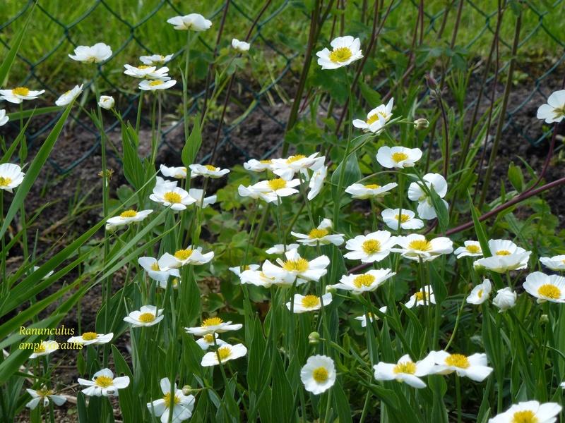 photos de plantes rares P1030612