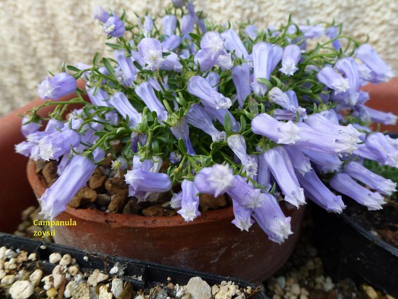 photos de plantes rares P1040510