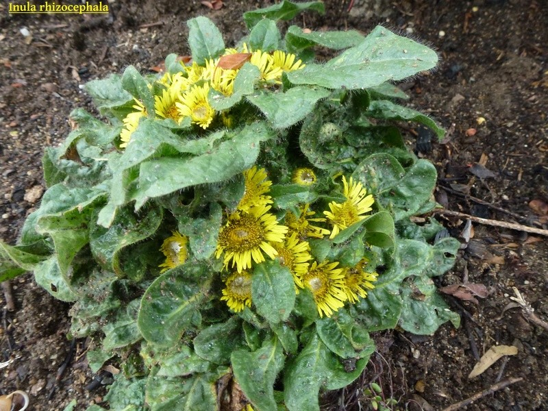 photos de plantes rares P1040610