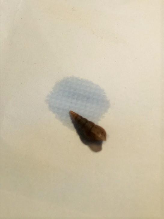 Hécatombe - Pourquoi mes planorbes meurent-elles toutes ? Img_2010