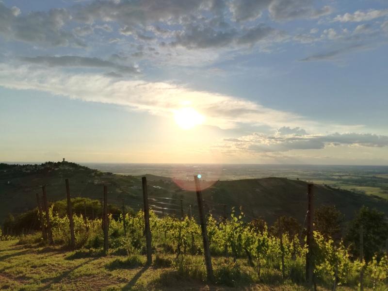 vino - Sabato 15 Luglio ore 19:00 Tramonto Di..Vino al castello di Montecalvo Versiggia Img_2010
