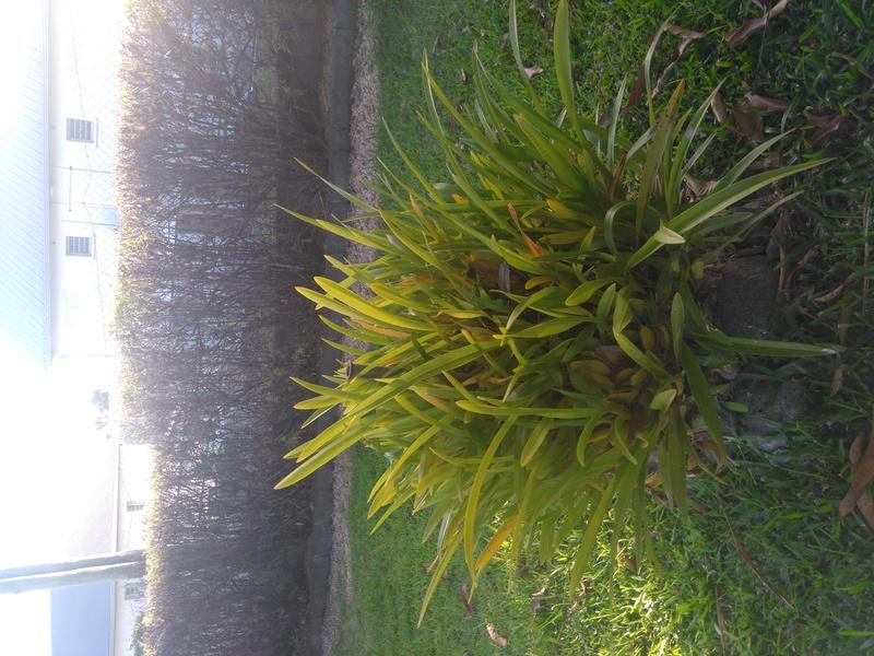 les orchidées de maman Dsc_8427
