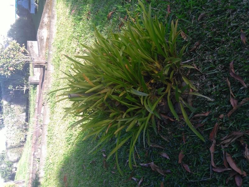 les orchidées de maman Dsc_8428