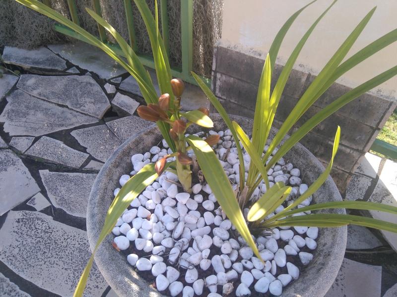 les orchidées de maman Dsc_8525