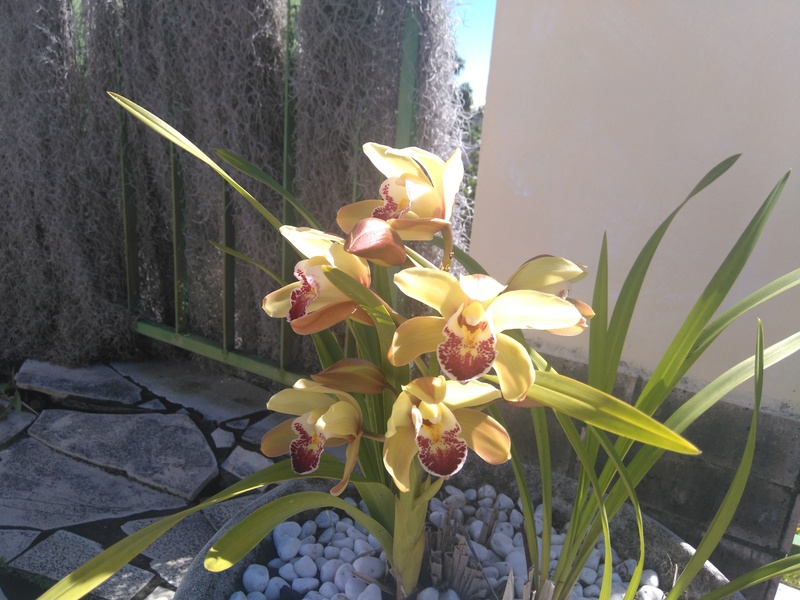 les orchidées de maman Dsc_8545