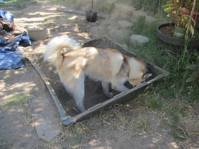 Digging Problems Leo_ye91