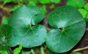 Tajna moć biljaka Milogl10