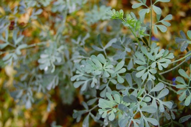 Tajna moć biljaka Sedefa10